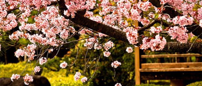 О православии в Японии: мои любимые японцы